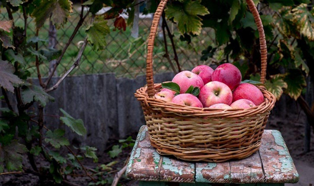 Ένα μήλο την ημέρα τον γιατρό τον κάνει πέρα… Ήξερες όμως ότι έχει δεκάδες άλλες χρήσεις;  - Κυρίως Φωτογραφία - Gallery - Video