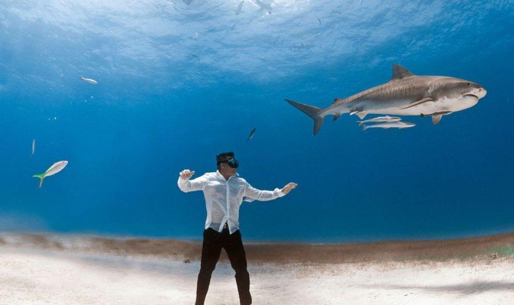 Αυτό δεν το έχετε ξανά δει: Γυναίκα στον βυθό με καρχαρίες  - τίγρεις φωτογραφίζει άνδρες μανεκέν με σμόκιν! μπρρρρ - Κυρίως Φωτογραφία - Gallery - Video
