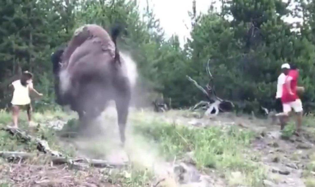 Βίντεο: Η στιγμή που ο άγριος βίσωνας επιτίθεται και πετάει 9χρονη στον αέρα – Οι γονείς δεν άκουσαν την απαγόρευση - Κυρίως Φωτογραφία - Gallery - Video