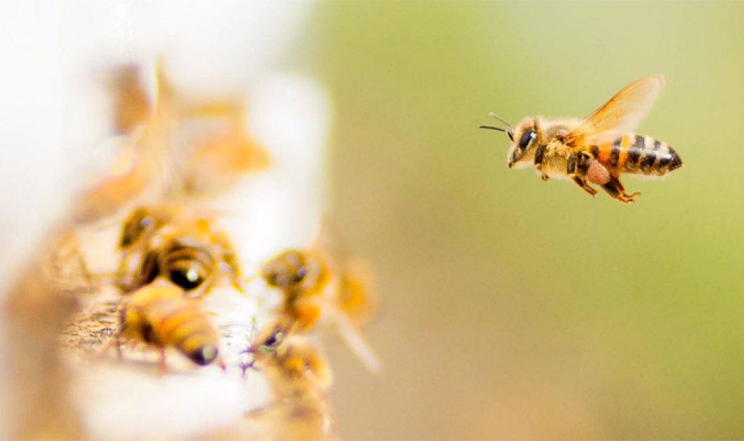 Ορεστιάδα: 41χρονος «μελισσοκόμος» άφησε την τελευταία του πνοή από τσίμπημα μέλισσας - Κυρίως Φωτογραφία - Gallery - Video