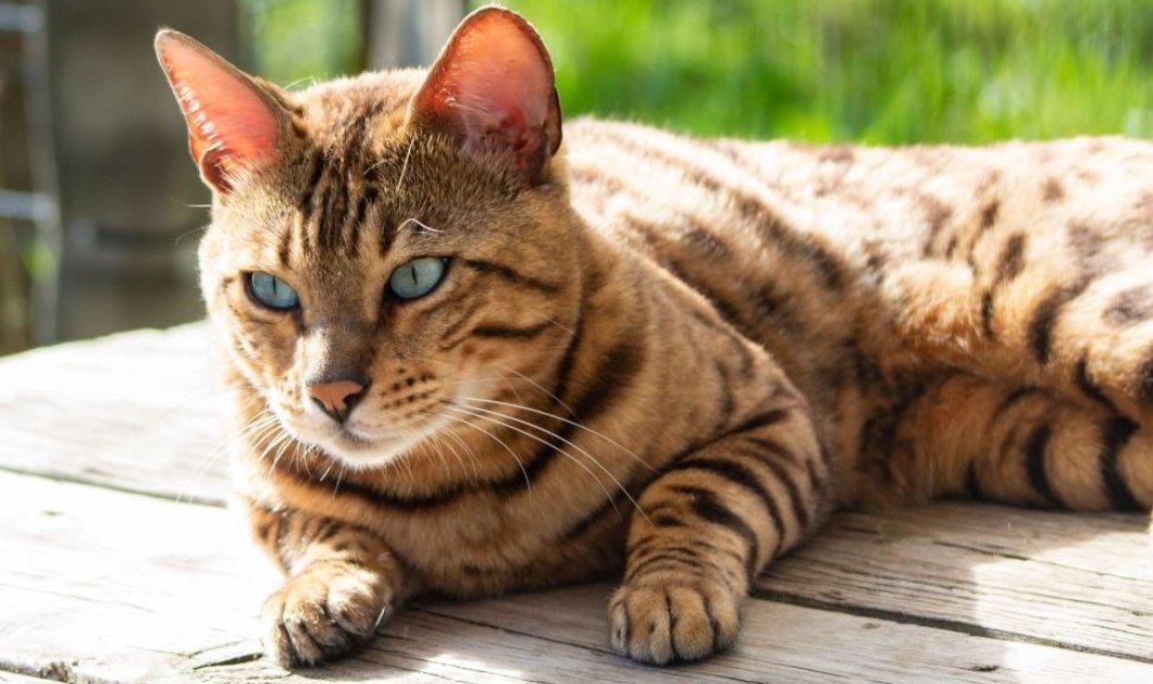 Φρίκη στα Χανιά: Άγνωστος πυροβολεί γάτες και τις αφήνει αιμόφυρτες (φωτό) - Κυρίως Φωτογραφία - Gallery - Video