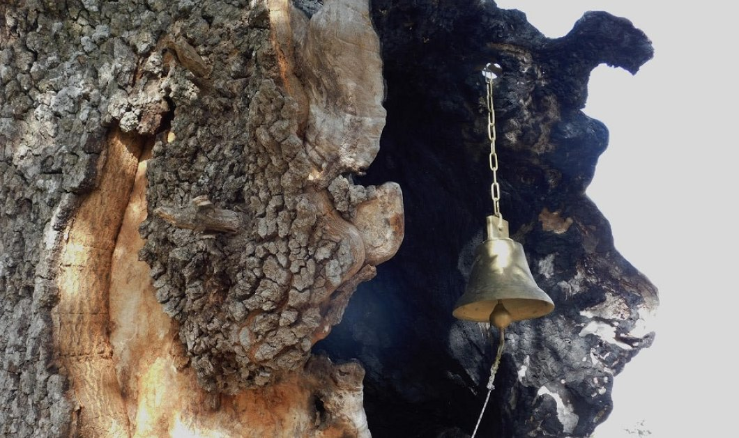 Η κρυμμένη Δεντροκκλησιά του Αγίου Παϊσίου στο χωριό Αγία Βαρβάρα της Κόνιτσας - Κτισμένη στο εσωτερικό μιας βελανιδιάς (φώτο) - Κυρίως Φωτογραφία - Gallery - Video