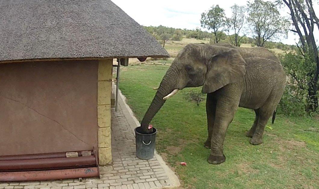 Το βίντεο της ημέρας: Αυτός είναι ο πιο νοικοκύρης ελέφαντας που έχετε δει ποτέ – Δείτε τι κάνει μόλις βλέπει σκουπίδια! - Κυρίως Φωτογραφία - Gallery - Video