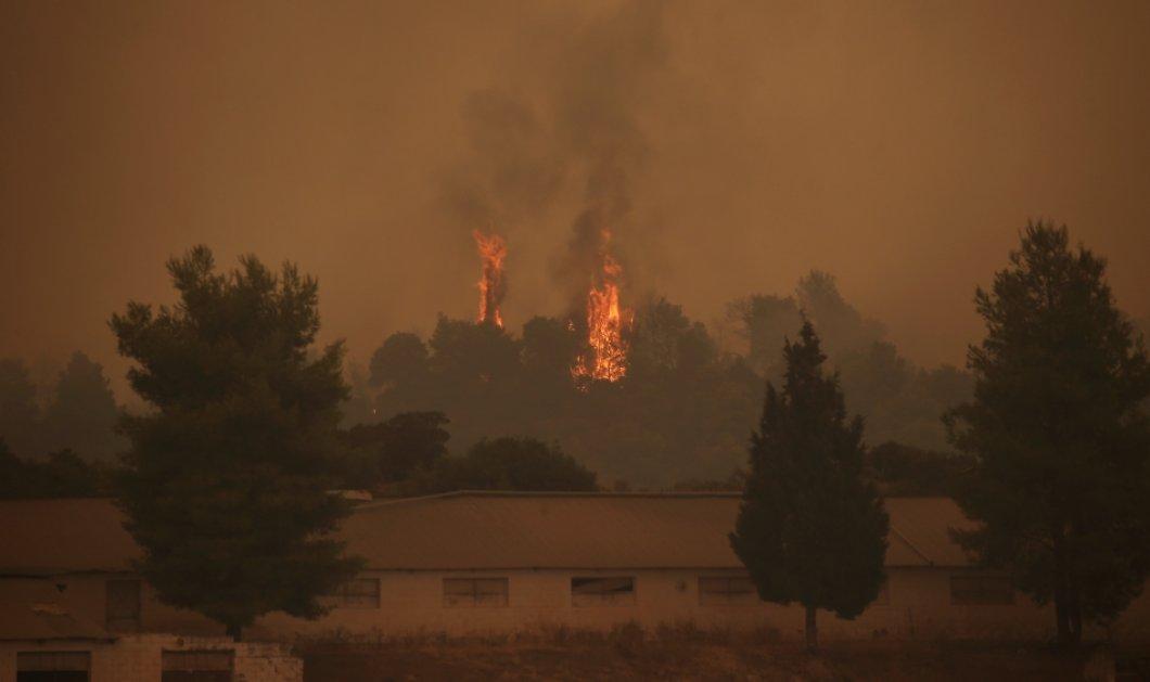 Στην Εύβοια στα καμένα: Οι φωτογραφίες από τα σημεία που η φωτιά σάρωσε τα πάντα στο πέρασμα της (φώτο) - Κυρίως Φωτογραφία - Gallery - Video