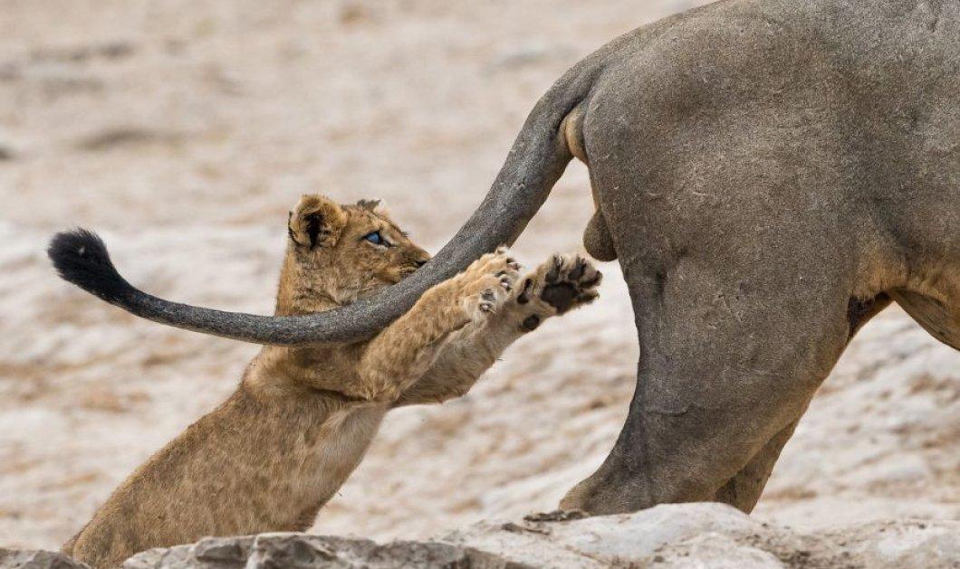 Αυτό το άλμπουμ θα σας κάνει να χαμογελάσετε - Οι φίλοι μας τα άγρια ζώα σε 40 απίθανες & ξεκαρδιστικές πόζες (φώτο) - Κυρίως Φωτογραφία - Gallery - Video