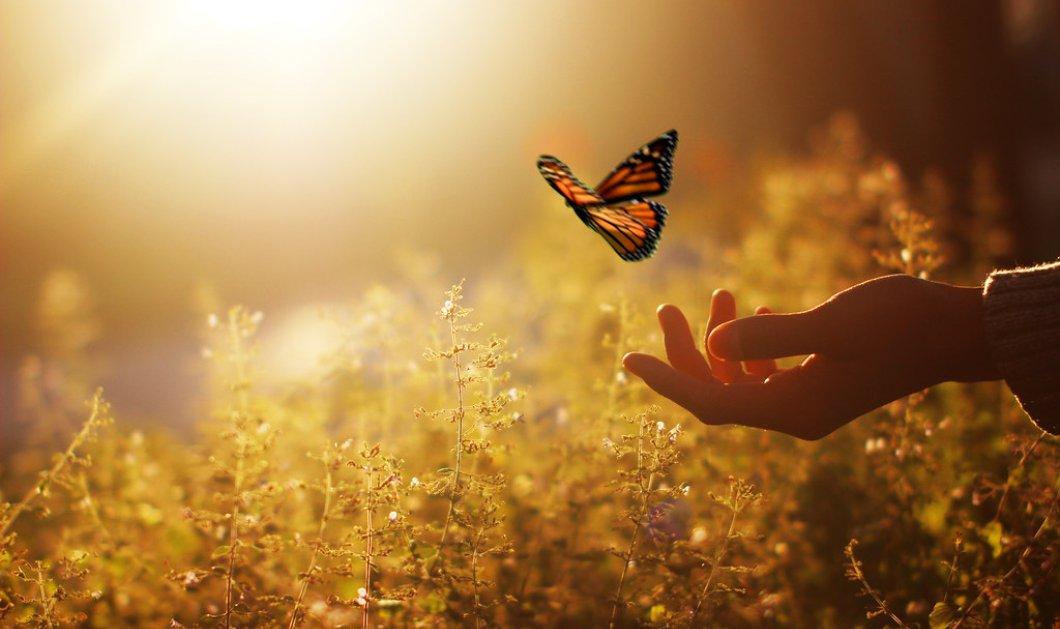 Λέξεις-πεταλούδες – Οι λέξεις έχουν τη δική τους ιστορία - Κυρίως Φωτογραφία - Gallery - Video