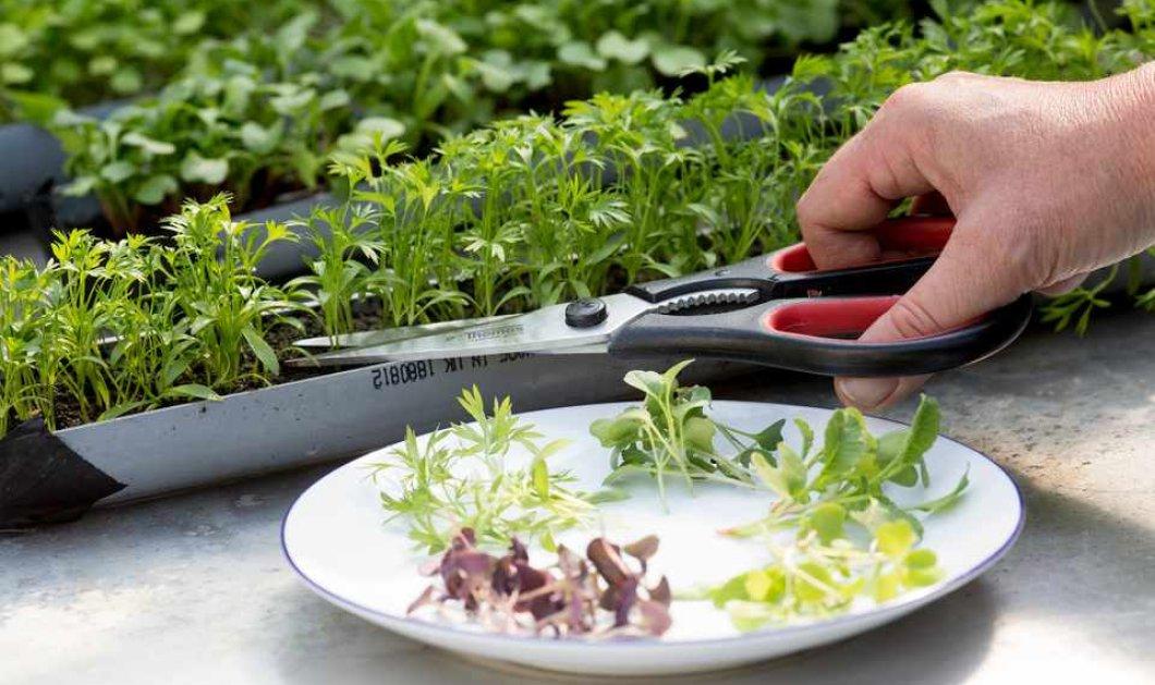 Άρθρο - φυλακτό & οδηγός για την βλάστηση των σπόρων στην κουζίνα μας  - Κυρίως Φωτογραφία - Gallery - Video