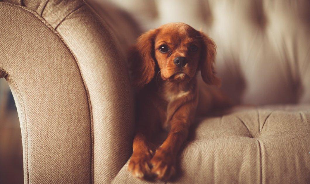 7 χρήσιμοι τρόποι για να κρατήσεις απασχολημένο το σκύλο σου μέσα στο σπίτι! (βίντεο) - Κυρίως Φωτογραφία - Gallery - Video