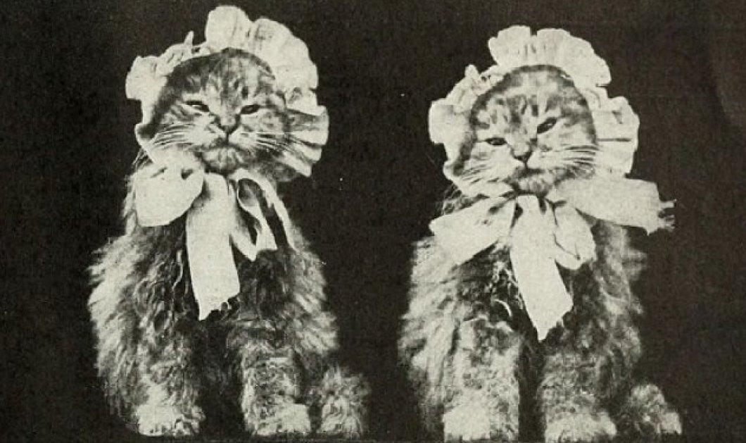 Απίθανες vintage φωτογραφίες με γατάκια - Θα σας φτιάξουν την μέρα! - Κυρίως Φωτογραφία - Gallery - Video