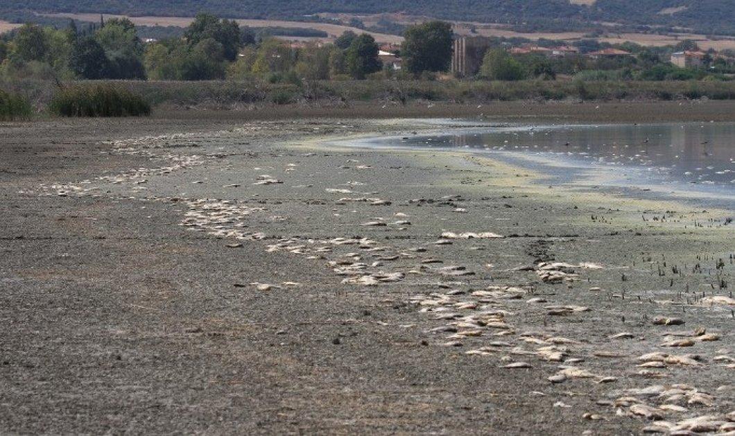 Χιλιάδες νεκρά ψάρια στην Κορώνεια - Το νερό κατέβηκε ως τα 60 εκατοστά στα μεγάλα βάθη - Κυρίως Φωτογραφία - Gallery - Video