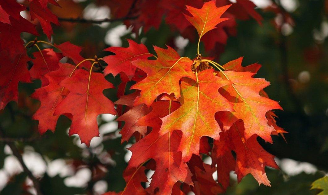45 πράγματα που μας κάνουν ευτυχισμένους τον Οκτώβριο - Άντε και καλό μας μήνα! - Κυρίως Φωτογραφία - Gallery - Video