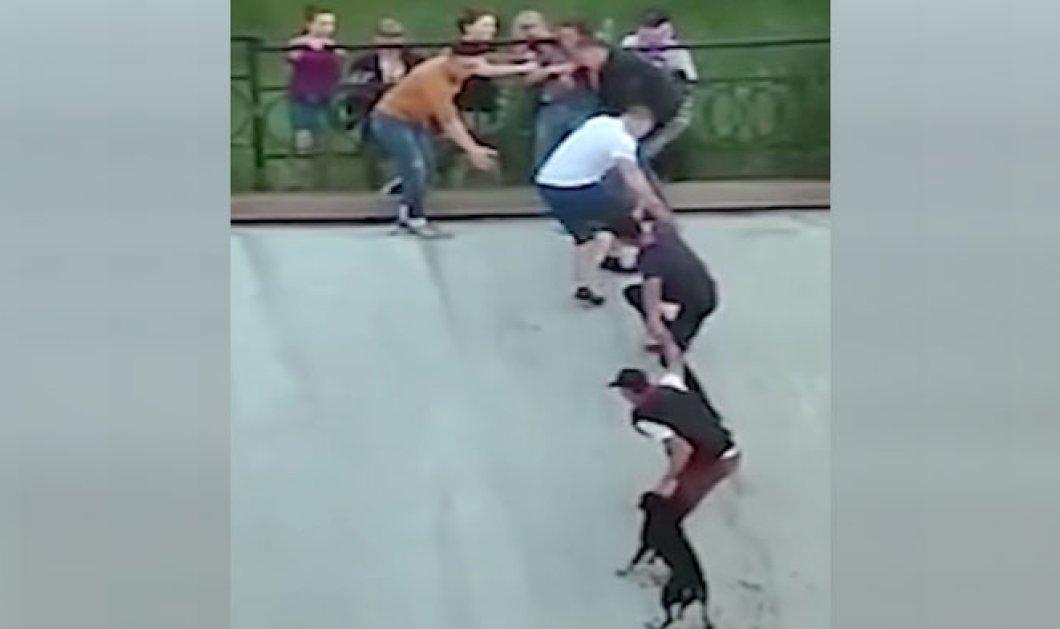 Το βίντεοτης χρονιάς: Με κίνδυνοτης ζωήςτου σώζειτον σκύλοαπότα ορμητικάνερά- Ανθρώπινηαλυσίδανα σώσουνκαι τους δύο - Κυρίως Φωτογραφία - Gallery - Video