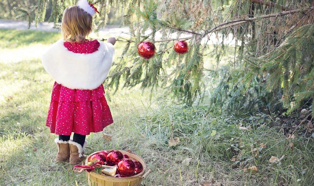 Ξέρετε που θα φωταγωγηθεί το πρώτο χριστουγεννιάτικο δέντρο για φέτος; - Άλλα 250.000 έλατα περιμένουν να τα στολίσετε  - Κυρίως Φωτογραφία - Gallery - Video