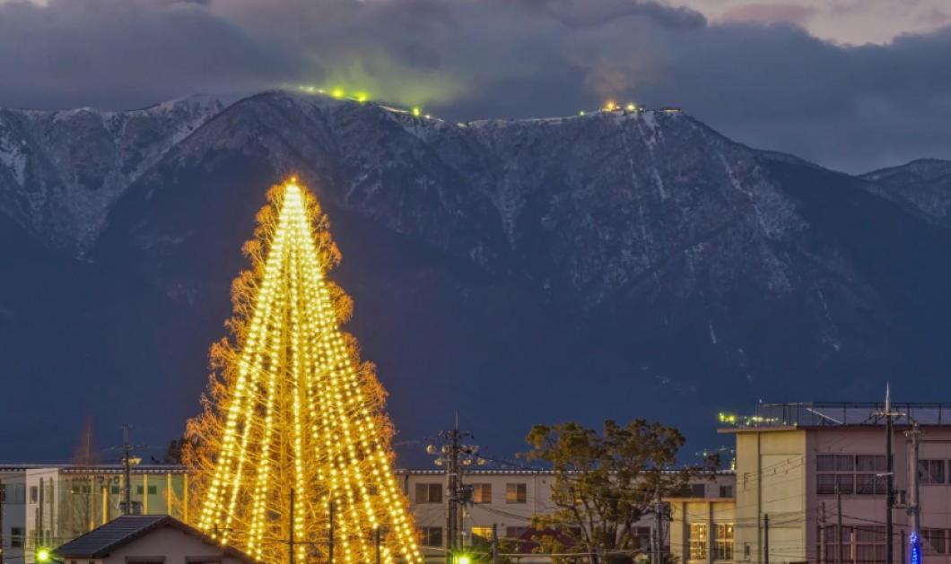 Good News: Να δείτε το Χριστουγεννιάτικο δένδρο με 51.626 κάρτες - Πήρε ρεκόρ Γκίνες  - Κυρίως Φωτογραφία - Gallery - Video