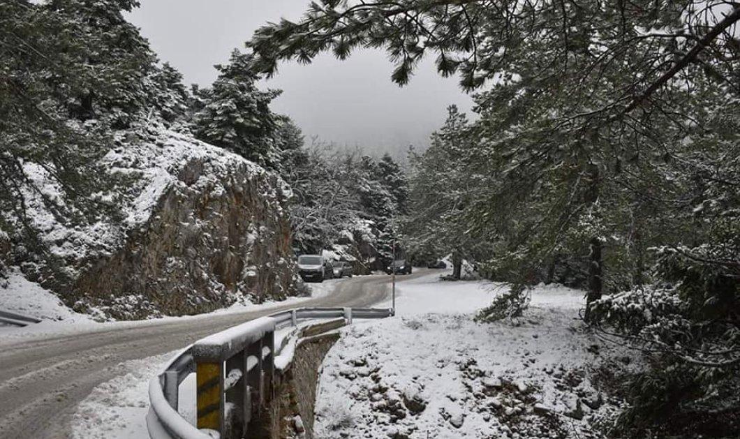 """Η Πάρνηθα """"ντύθηκε στα λευκά"""": Έπεσαν τα πρώτα χιόνια - Φώτο & βίντεο - Κυρίως Φωτογραφία - Gallery - Video"""