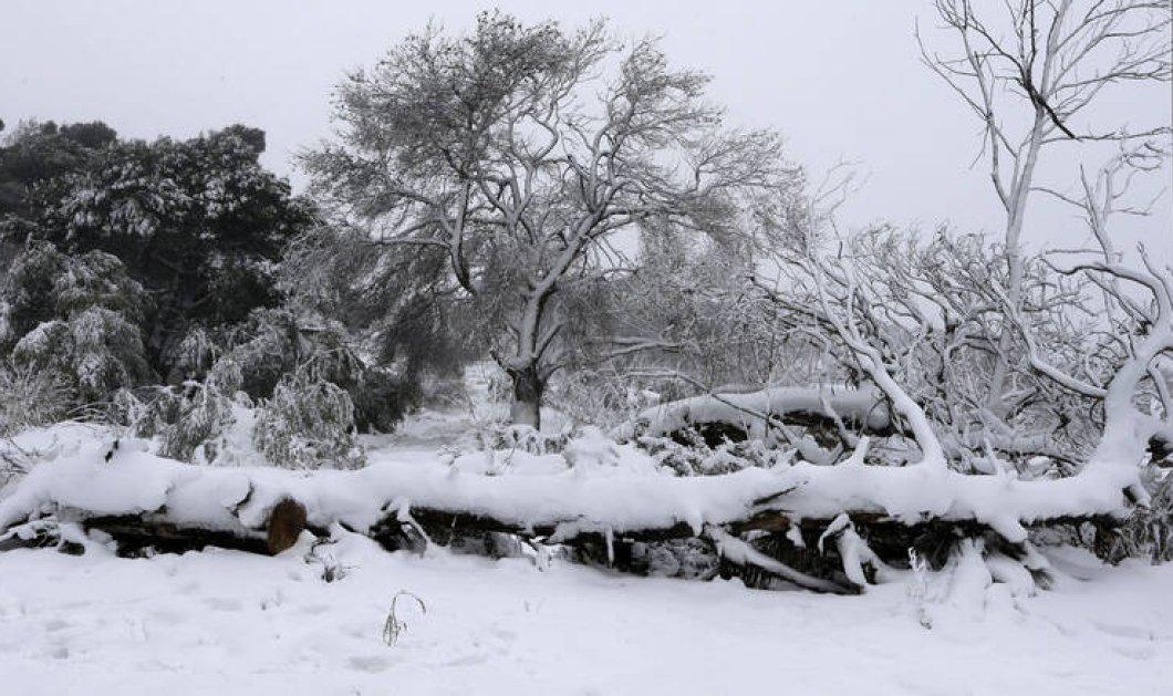 OΓιάννης Καλλιάνοςπροβλέπειμε κάθελεπτομέρειατον καιρότις επόμενεςμέρες- Το νέοψυχρόμέτωποαπό2Ιανουαρίου - Κυρίως Φωτογραφία - Gallery - Video