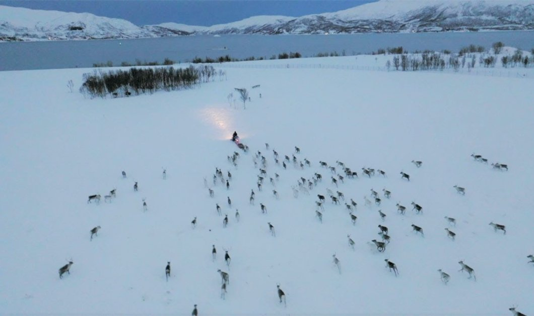 """Απίστευτο βίντεο: Snowmobile """"μαγνητίζει"""" κοπάδι ταράνδων στη Νορβηγία - Μαζεύονται όλα γύρω του  - Κυρίως Φωτογραφία - Gallery - Video"""
