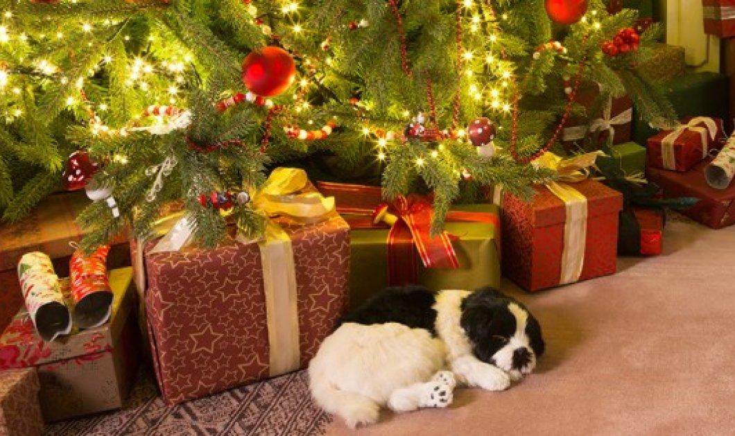 Ο Σπύρος Σούλης δείχνει: 11 εύκολα βήματα για να φτιάξετε το τέλειο Χριστουγεννιάτικο Δέντρο  - Κυρίως Φωτογραφία - Gallery - Video