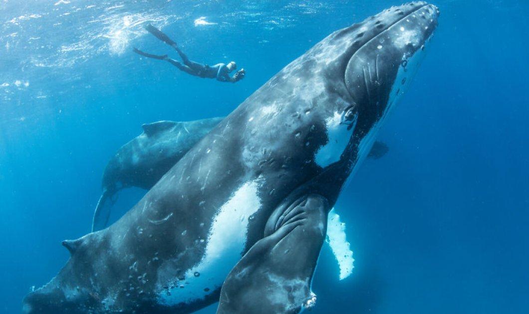 13 μοναδικές φωτογραφίες με φάλαινες να παίζουν με τους... ανθρώπους! - Κυρίως Φωτογραφία - Gallery - Video