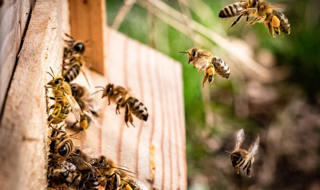 40.000 πραγματικές... άγριες μέλισσες όρμησαν στους δρόμους της Καλιφόρνια – 5 τραυματίες & πανικός στην πόλη (φωτό) - Κυρίως Φωτογραφία - Gallery - Video