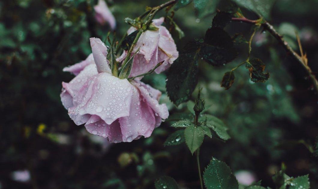 Καιρός: Ισχυρές βροχές και καταιγίδες σήμερα, Παρασκευή  - Κυρίως Φωτογραφία - Gallery - Video