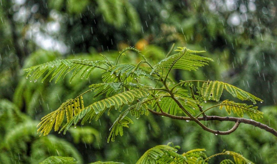 Καιρός: Πού θα σημειωθούν βροχές και καταιγίδες την Πέμπτη - Κυρίως Φωτογραφία - Gallery - Video