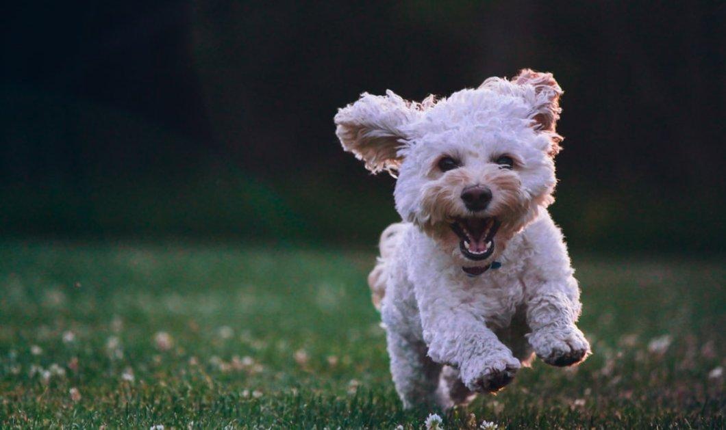 Κορωνοϊός: Σε καραντίνα σκύλος που βρέθηκε θετικός στον ιό - Μπορεί να κολλήσει άνθρωπο;  - Κυρίως Φωτογραφία - Gallery - Video