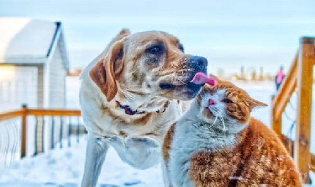 Τα 8+1 ψυχικά οφέλη από την συμβίωση με τους σκύλους και τις γάτες μας - Κυρίως Φωτογραφία - Gallery - Video