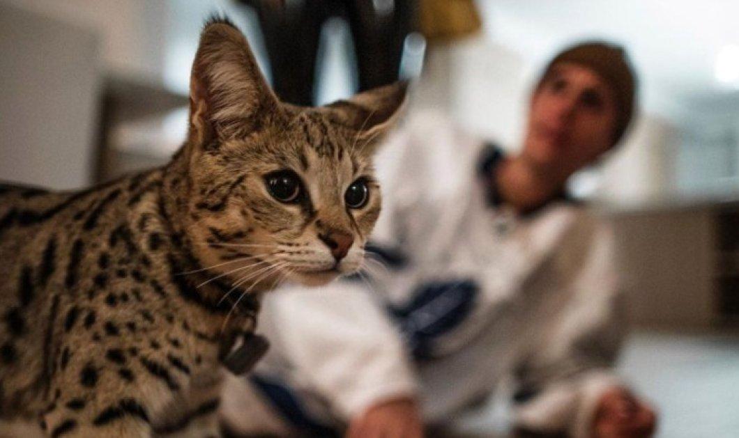 Story of the day: Τηλεοπτική σεφ βρήκε τον γάτο Sushi του Τζάστιν Μπίμπερ που χάθηκε πριν από ένα μήνα (φωτό) - Κυρίως Φωτογραφία - Gallery - Video