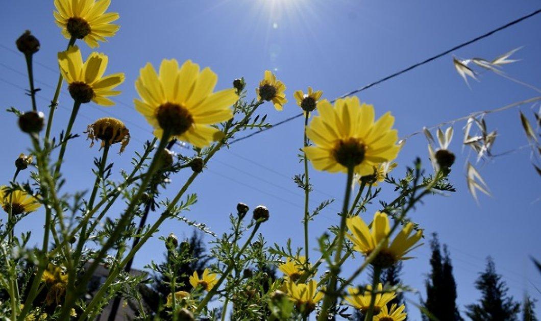 Μ. Παρασκευή με καλό καιρό - Άνοδος της θερμοκρασίας & εξασθένηση των ανέμων - Κυρίως Φωτογραφία - Gallery - Video