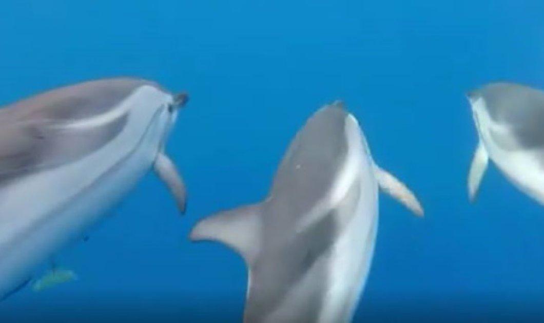 Το βίντεο της ημέρας έρχεται από την Ζάκυνθο: 50 δελφίνια παίζουν & κολυμπούν στα καταγάλανα νερά (Βίντεο)  - Κυρίως Φωτογραφία - Gallery - Video
