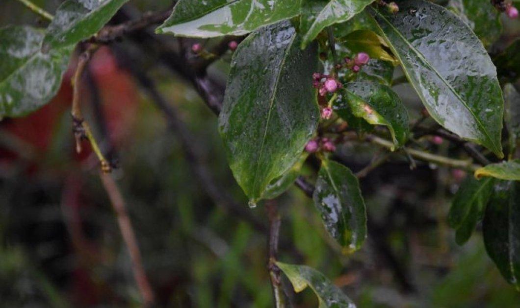 Χαλάει ο καιρός από σήμερα Τετάρτη - Που θα βρέξει;  - Κυρίως Φωτογραφία - Gallery - Video