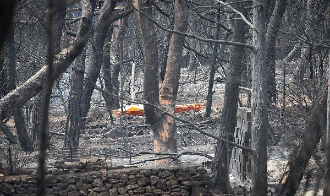 Εισαγγελική παρέμβαση μετά τις καταγγελίες για την φονική πυρκαγιά στο Μάτι - Κυρίως Φωτογραφία - Gallery - Video