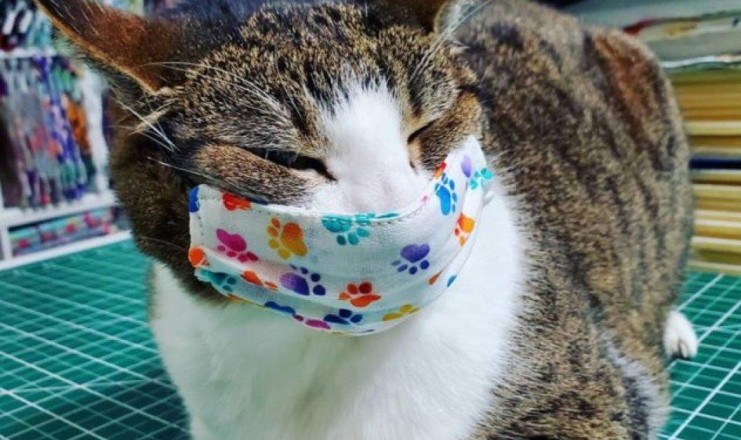 Βρετανός κόλλησε τον γάτο του - Ούτε τα κατοικίδια γλίτωσαν από τον κορωνοϊό - Κυρίως Φωτογραφία - Gallery - Video