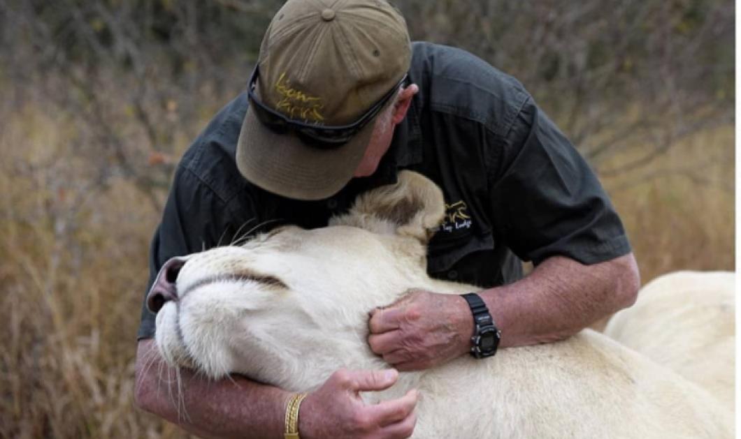 Story of the day: Δυο λευκά λιοντάρια κατασπάραξαν τον άνδρα που τα μεγάλωνε – Το δράμα εκτυλίχθηκε μπροστά στα μάτια της γυναίκας του - Κυρίως Φωτογραφία - Gallery - Video