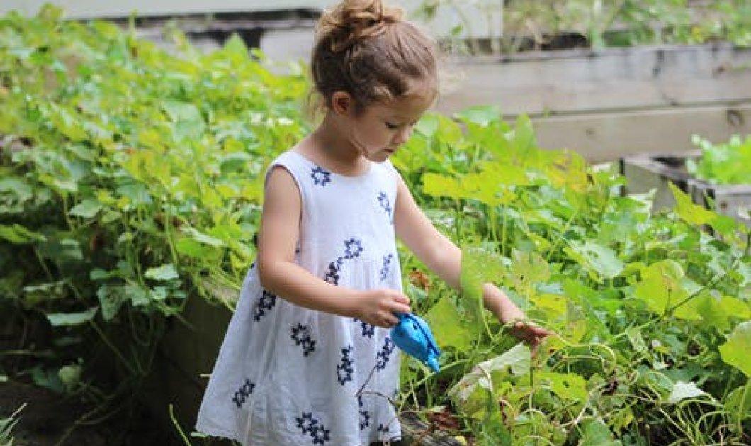Καλλιεργήστε Φασκόμηλο: Τα μυστικά της καλλιέργειας & τα οφέλη για την υγεία! - Κυρίως Φωτογραφία - Gallery - Video