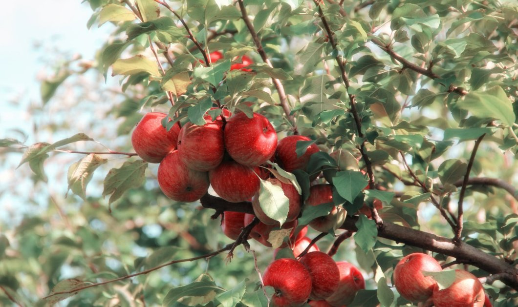 Τα καλύτερα Φθινοπωρινά τρόφιμα - Γεμάτα πλεονεκτήματα για την υγεία μας - Κυρίως Φωτογραφία - Gallery - Video