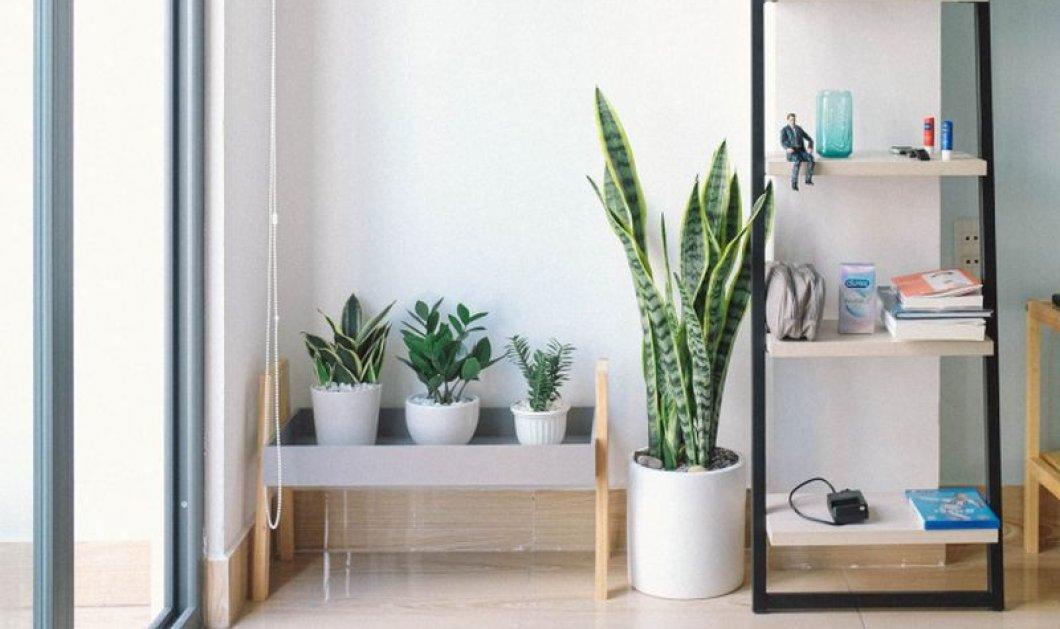 Σπύρος Σούλης: Αυτά είναι τα 3 Chic Φυτά που θα βρείτε σε όλα τα μοντέρνα σπίτια! - Κυρίως Φωτογραφία - Gallery - Video