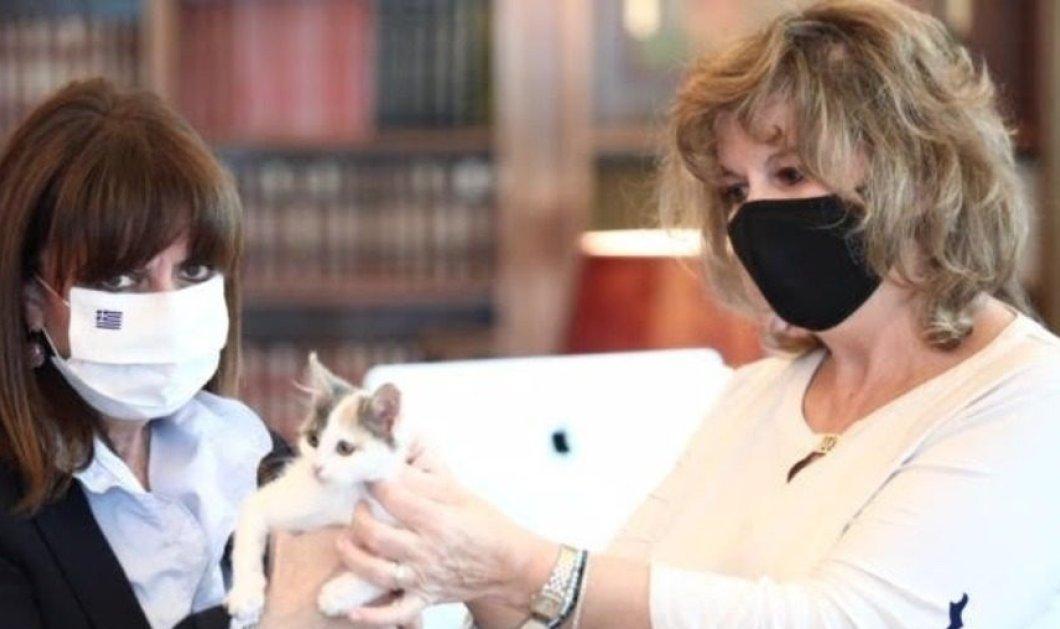 """Η Πρόεδρος της Δημοκρατίας με γατάκι στο σπίτι – Το βάφτισε """"Καλυψώ"""" & είναι ολόιδιος ο Μανού μου (Φωτό)  - Κυρίως Φωτογραφία - Gallery - Video"""