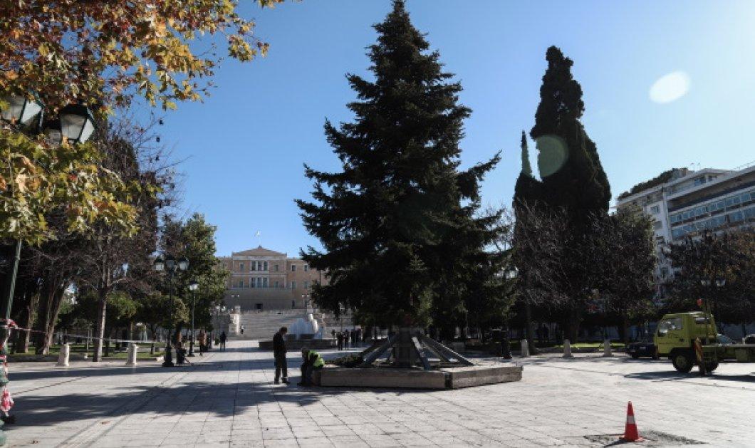 Επιτέλους Χριστούγεννα στην καρδιά της πρωτεύουσας – Το δέντρο που στόλισε ο δήμος Αθηναίων στην πλατεία Συντάγματος (Φωτό)  - Κυρίως Φωτογραφία - Gallery - Video