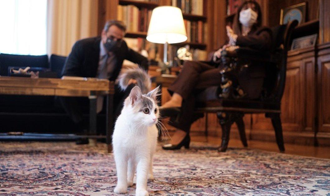 """Καλυψώ: Η γάτα της Προέδρου της Δημοκρατίας, Κατερίνας Σακελλαροπούλου """"έκλεψε την καρδιά"""" του Πρωθυπουργού (φωτό) - Κυρίως Φωτογραφία - Gallery - Video"""