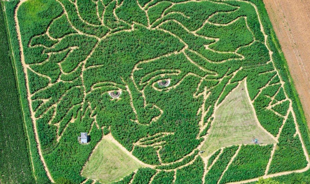 Αυτό θα πει ταλέντο: Iταλός ζωγράφισε με...  τρακτέρ το πορτρέτο του Μπετόβεν - Σε έκταση 25.000 τ.μ.  (βίντεο)  - Κυρίως Φωτογραφία - Gallery - Video