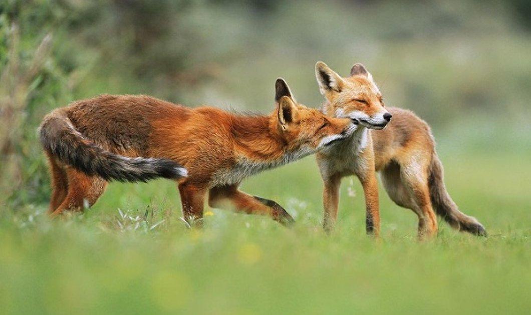 Πανέμορφα κλικς: Βραβευμένος φωτογράφος απαθανατίζει μικρά και αξιολάτρευτα ζώα - Μυρίζουν τα λουλούδια ή «φιλιούνται» - Κυρίως Φωτογραφία - Gallery - Video
