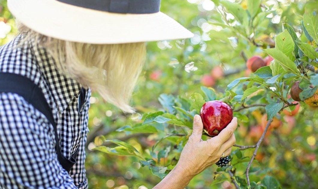 Κατεψυγμένα Vs φρέσκα, φρούτα και λαχανικά: Νέα μελέτη καταρρίπτει όσα ξέραμε για την διατροφική τους αξία - Κυρίως Φωτογραφία - Gallery - Video