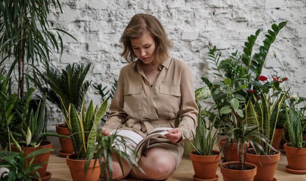 Σπύρος Σούλης: Προστατεύστε τα φυτά σας τον Χειμώνα χωρίς να τα βάλετε μέσα στο σπίτι - Κυρίως Φωτογραφία - Gallery - Video