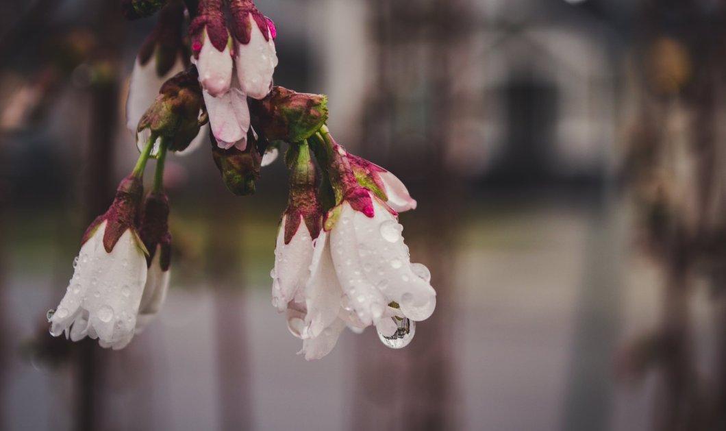 Καιρός:  Ηλιος το πρωί, βροχές από το απόγευμα  - Πότε θα χτυπήσει η νέα ψυχρή εισβολή   - Κυρίως Φωτογραφία - Gallery - Video