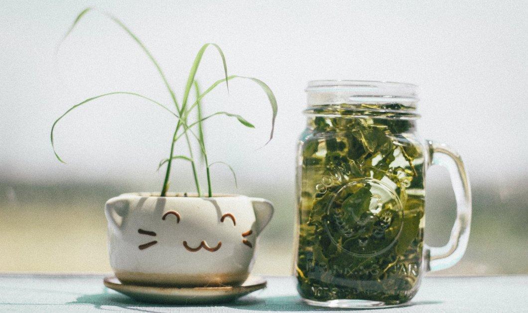 10 αποδεδειγμένα οφέλη για το πράσινο τσάι - Μπορεί να μειώσει τον κίνδυνο καρδιαγγειακής νόσου;  - Κυρίως Φωτογραφία - Gallery - Video
