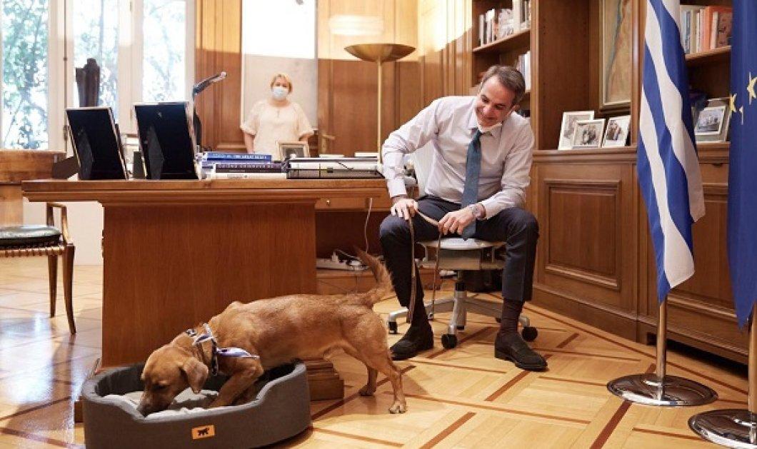 Γνωρίστε τον Peanut! Το αδέσποτο σκυλάκι που υιοθέτησε ο Μητσοτάκης: Πλέον τριγυρνάει στου Μαξίμου & απολαμβάνει τα χάδια του πρωθυπουργού (φωτό) - Κυρίως Φωτογραφία - Gallery - Video