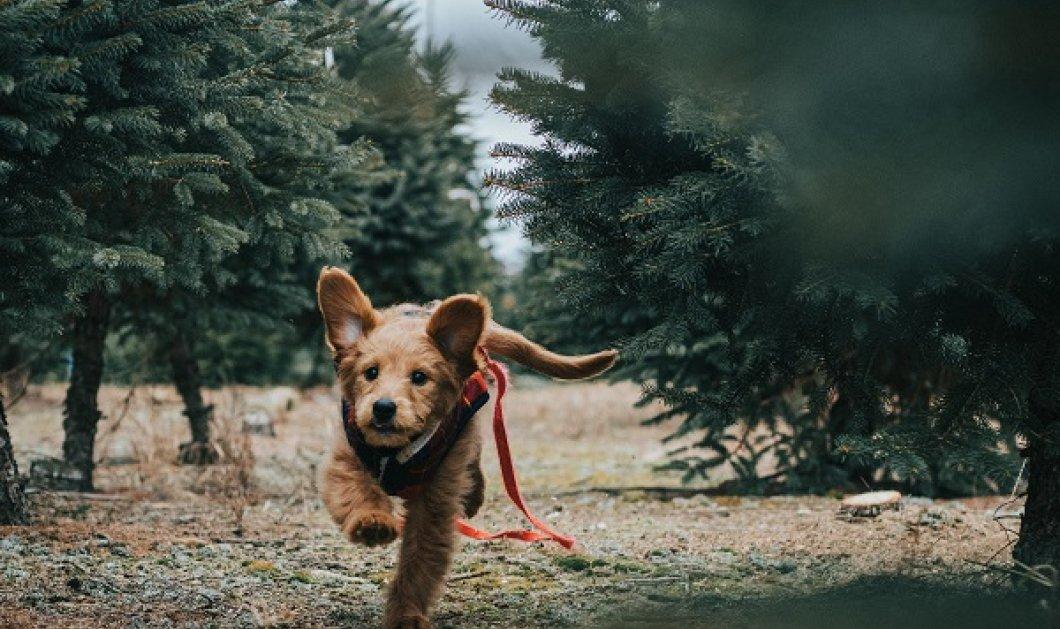 Ο Βασίλης Κανέλλης γράφει & συγκινεί: Δεν υπάρχουν αδέσποτα ζώα αλλά αδέσποτοι & απάνθρωποι πολίτες - υιοθετήστε ένα αδεσποτάκι - Σώζετε μια ζωή - Κυρίως Φωτογραφία - Gallery - Video