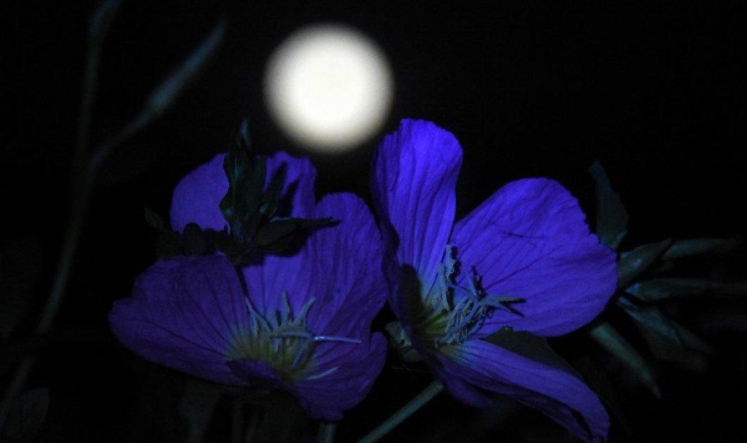 Άση Μπήλιου: Πώς θα επηρεάσει η Πανσέληνος στις 26 Μαΐου τα 12 ζώδια; - Το φεγγάρι φέρνει αλλαγές & ανατροπές - Κυρίως Φωτογραφία - Gallery - Video